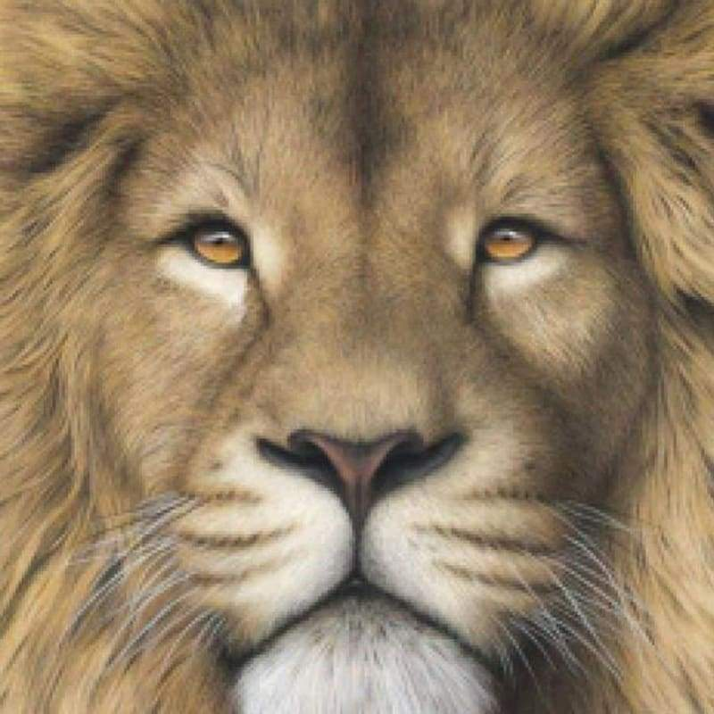 5D DIY Diamond Painting Kits Cartoon Lion Face