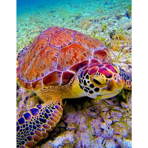 5D DIY Diamond Painting Kits Sea Turtle - 3