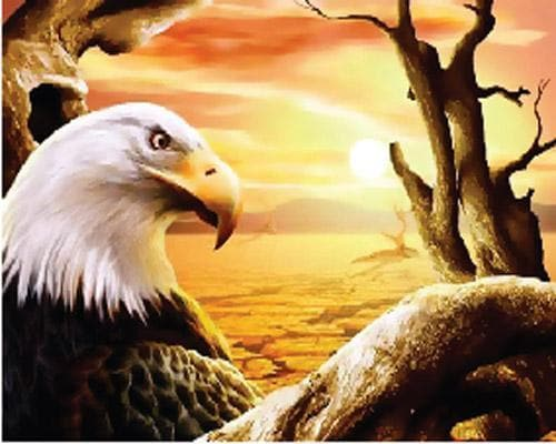 Eagle Diy Paint By Numbers Kits ZXB966 - NEEDLEWORK KITS