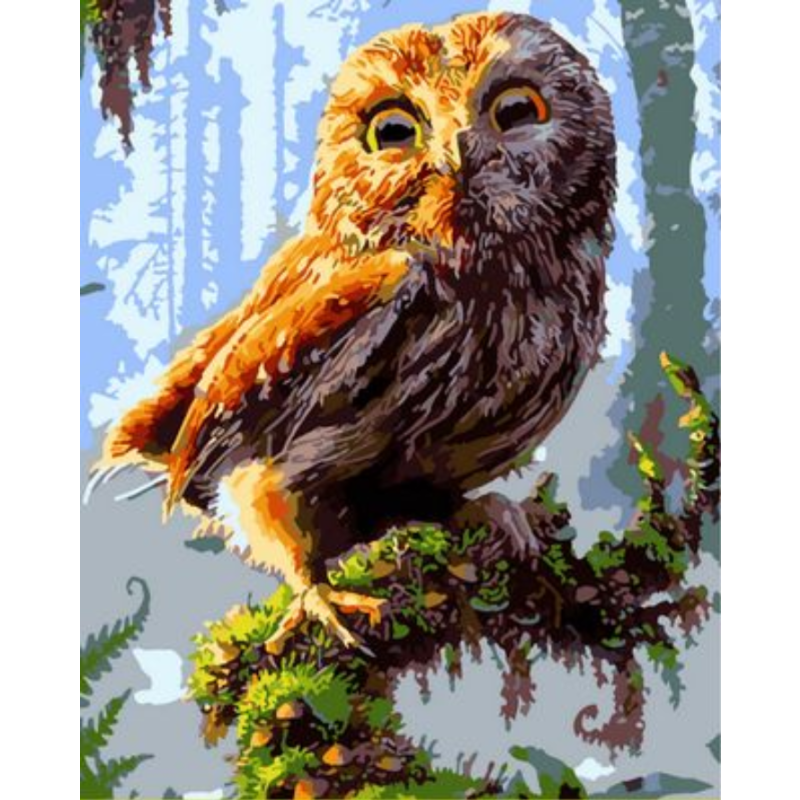 Owl Diy Paint By Numbers Kits ZXQ1434 - NEEDLEWORK KITS