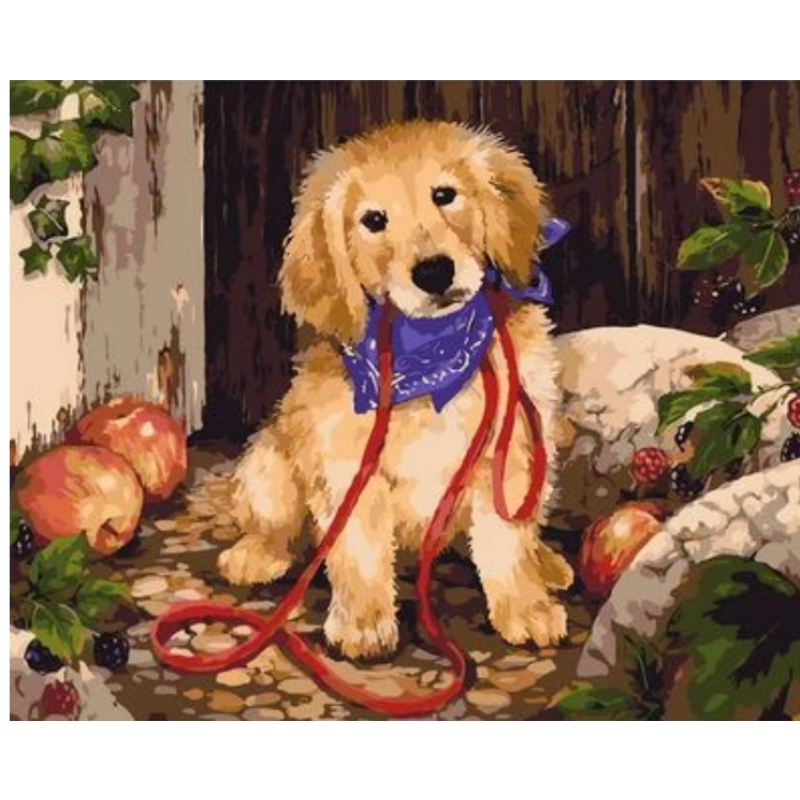 Dog Diy Paint By Numbers Kits ZXQ2496 - NEEDLEWORK KITS