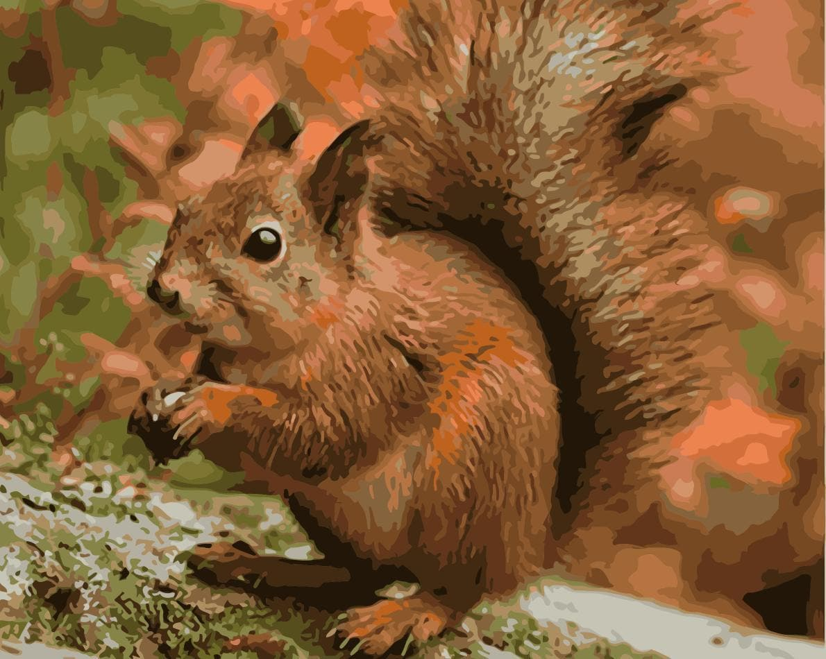 Squirrel Diy Paint By Numbers Kits WM-1115 - NEEDLEWORK KITS