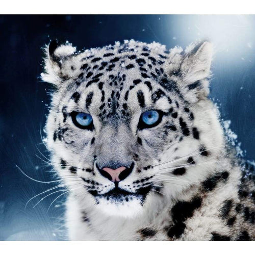5D DIY Diamond Painting Kits Black White Cool Leopard