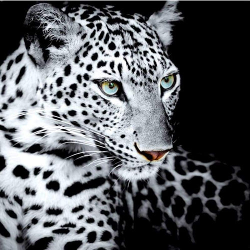 5D DIY Diamond Painting Kits Black White Animal Portrait Leopard