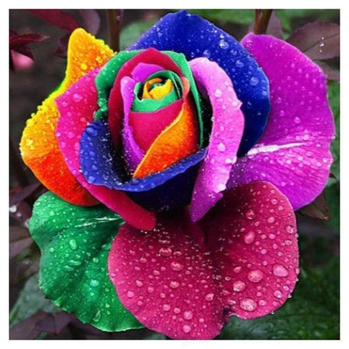 5D DIY Diamond Painting Kits Pretty Colorful Rose