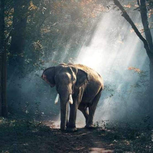 5D DIY Diamond Painting Kits Elephant in the Forest - Z0