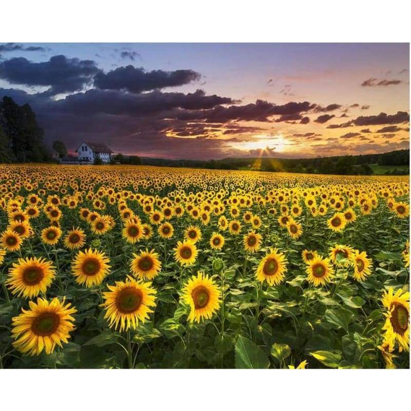 Full Drill - 5D DIY Diamond Painting Kits Sunset Plant Sunflower Field Scene - NEEDLEWORK KITS