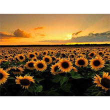 Load image into Gallery viewer, Full Drill - 5D DIY Diamond Painting Kits Sunset Plant Sunflower Field - NEEDLEWORK KITS