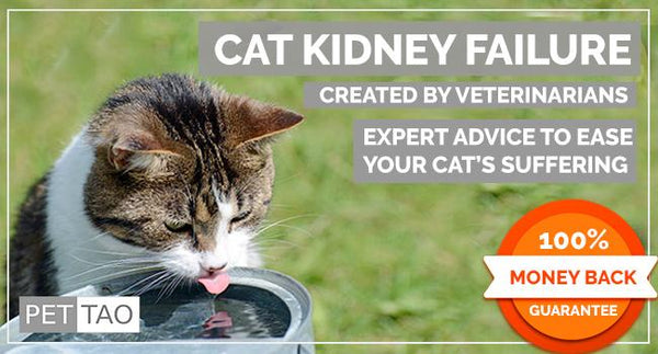 Cat Kidney Failure Course  - Instant Digital Download