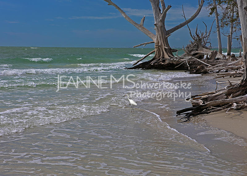 Fishing at Lovers Key Photographic Art Jeanne Schwerkoske