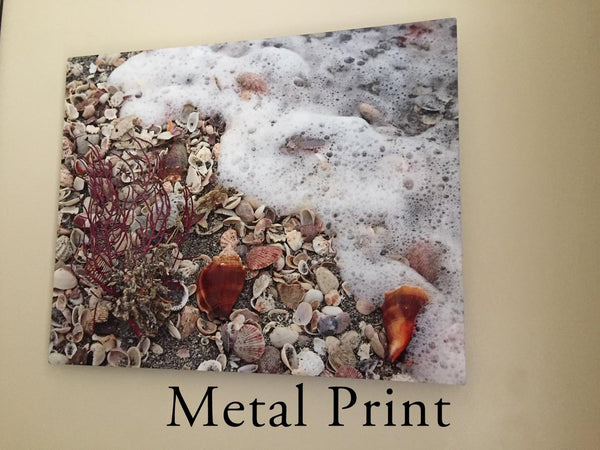 Metal Print Example Photographic Art Jeanne Schwerkoske