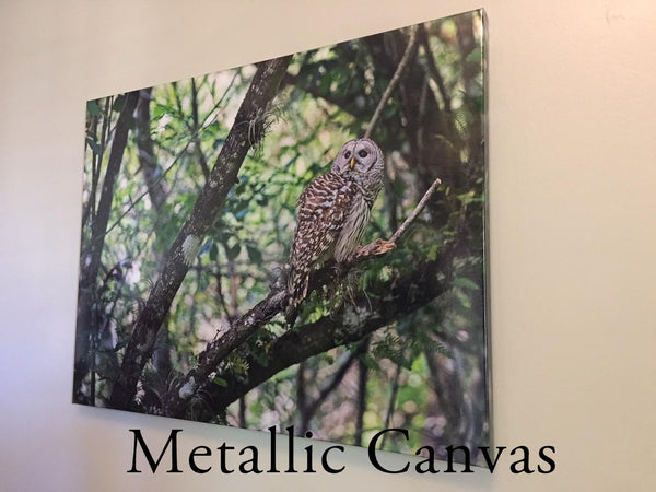 Metallic Canvas Wrap Example Photographic Art Jeanne Schwerkoske