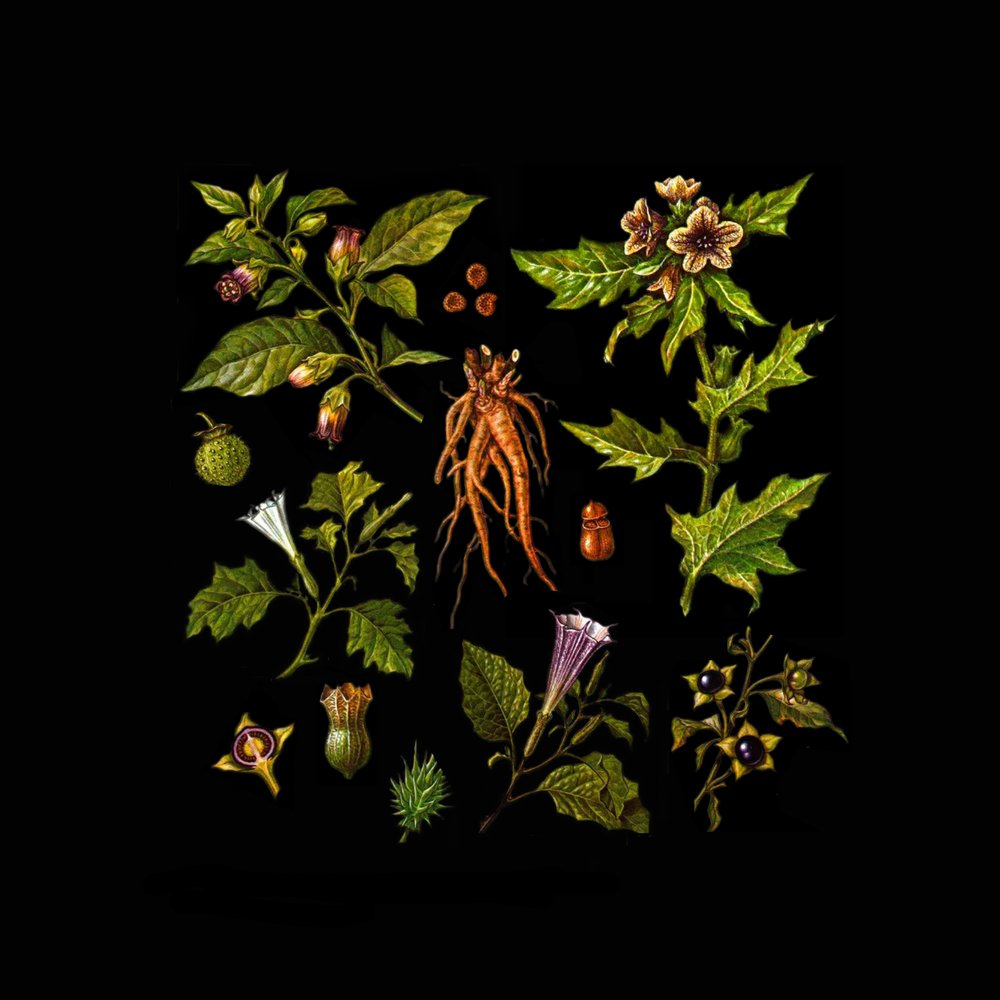 Folklore Of Plants Vol.II - The Venefic Garden