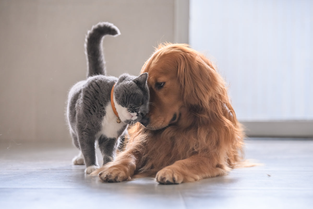 Dog and Cat showing affection to one another