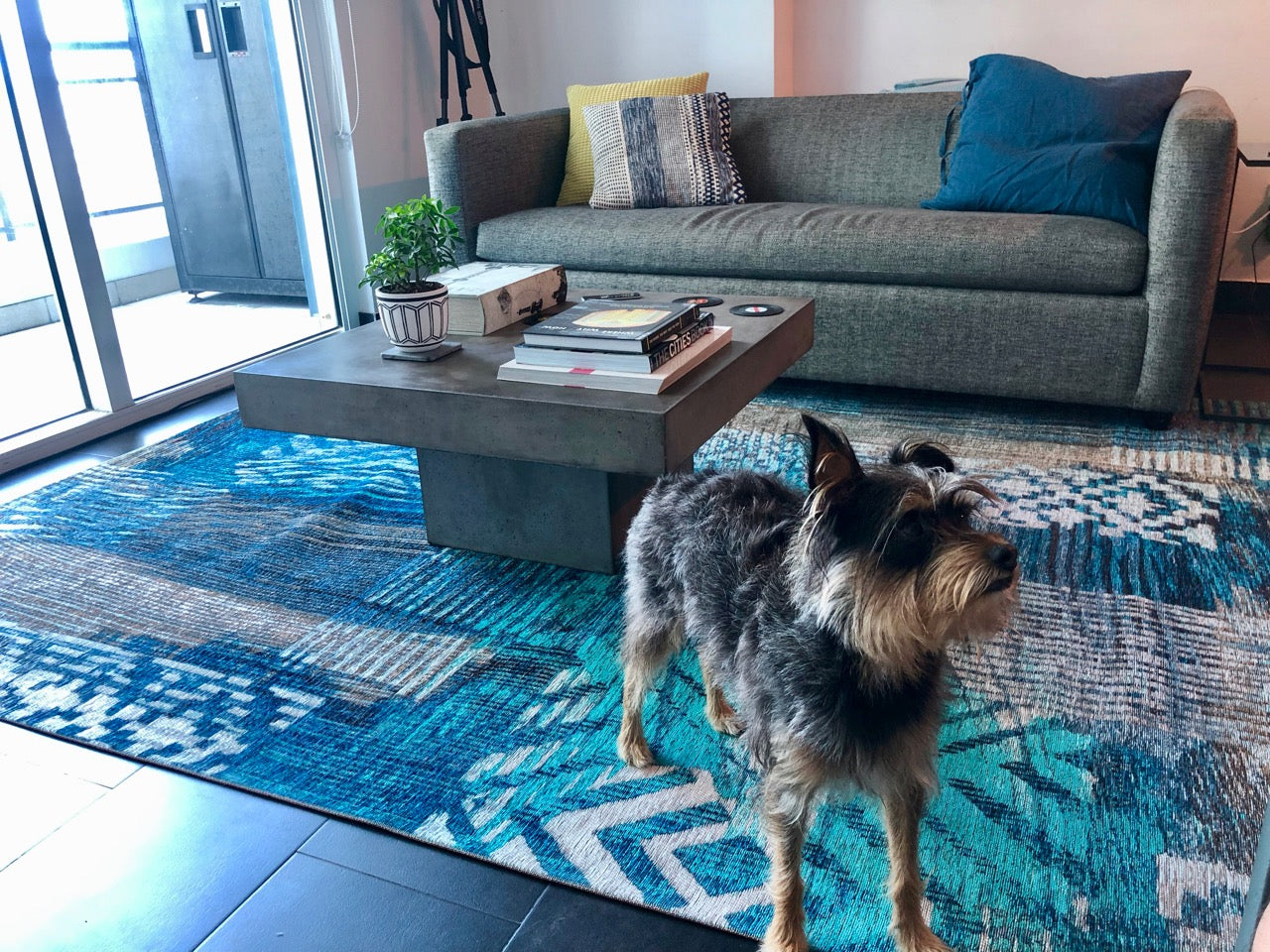 Pets and Rugs: 6 Tricks to Keep Your Area Rugs Clean
