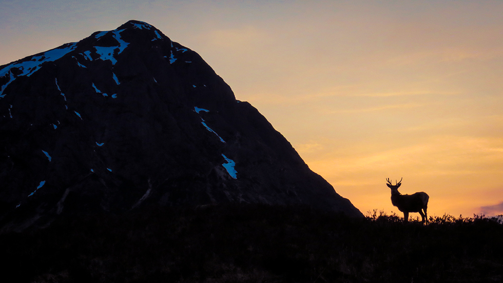 a deer stands next to a scottish munro mountain bathed in orange light from the setting sun