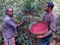 Oromia Coffee Farmers