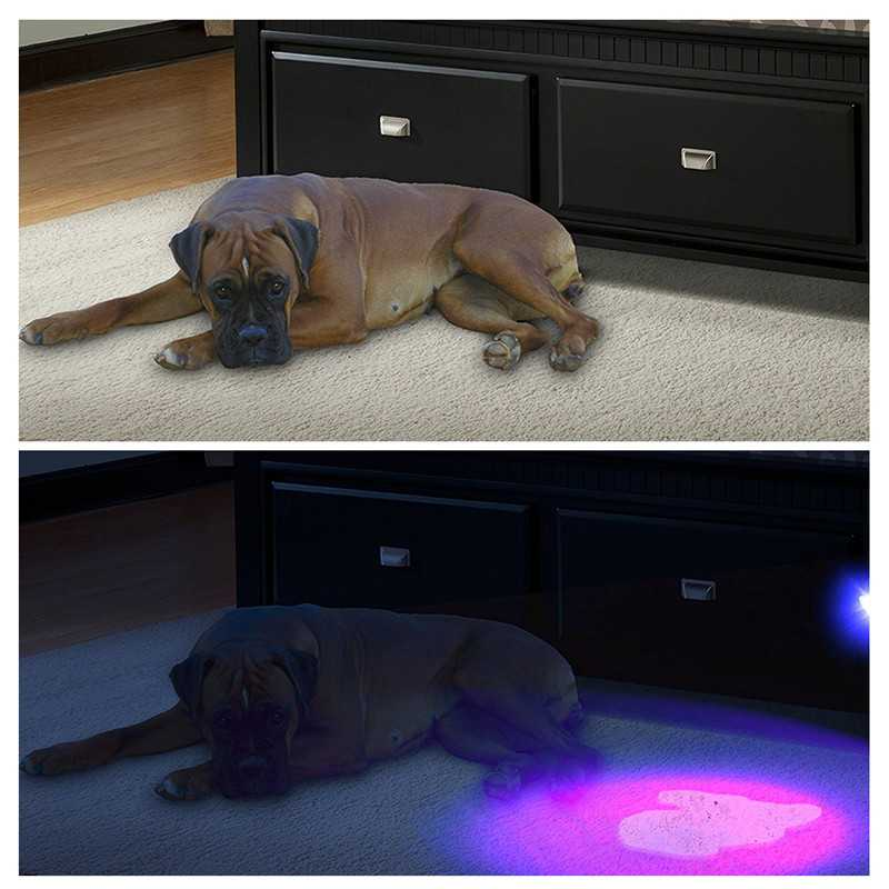 Decorative Beast Pet UV LED Flashlight Torches