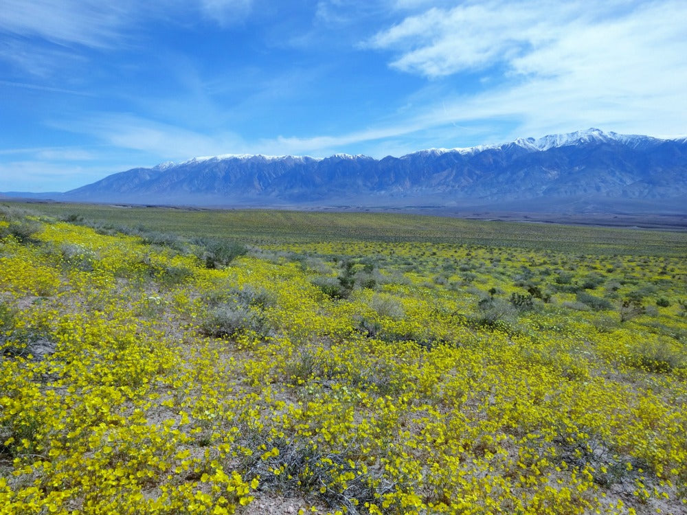 The Sheepherder 20 Mile Loop in the Volcanic Tablelands