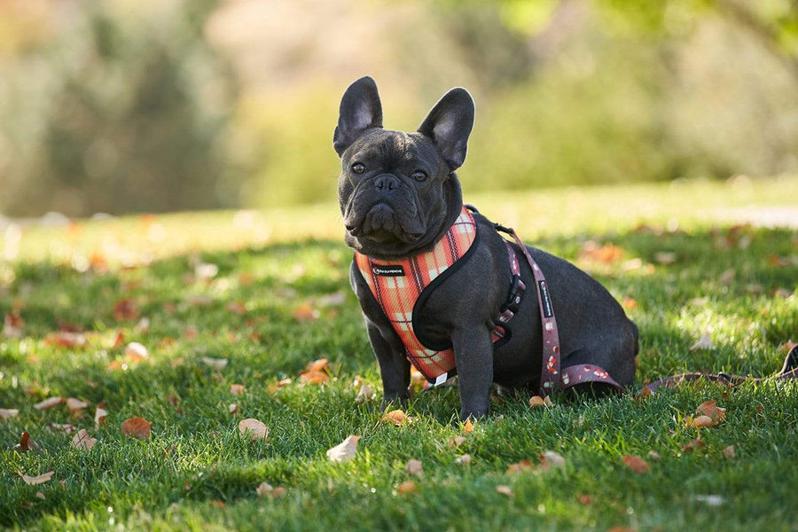 Oui Oui Frenchie Reversible Harnesses Oui Oui Frenchie Reversible Harness - Fall