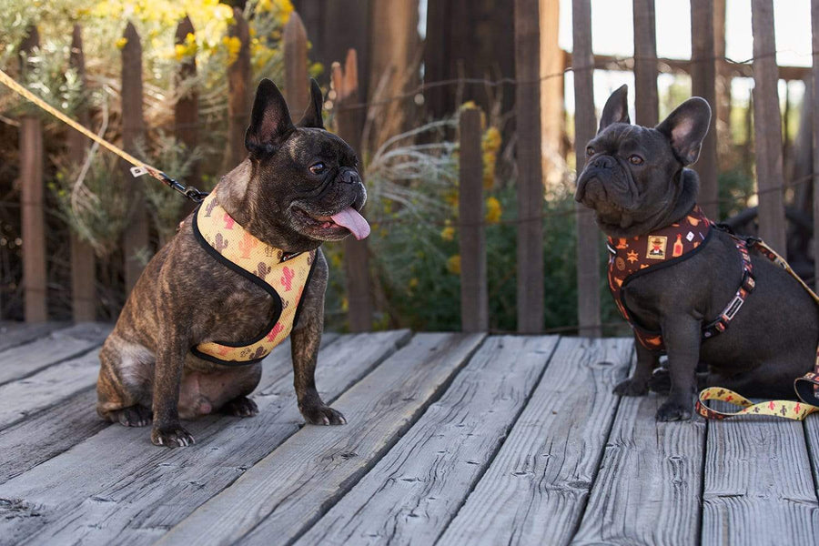 Oui Oui Frenchie Reversible Harnesses Oui Oui Frenchie Reversible Harness - Texas