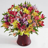 200 Blooms of Peruvian Lilies