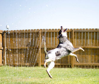 How to Have a Fun Summer in Your Yard with Your Dog