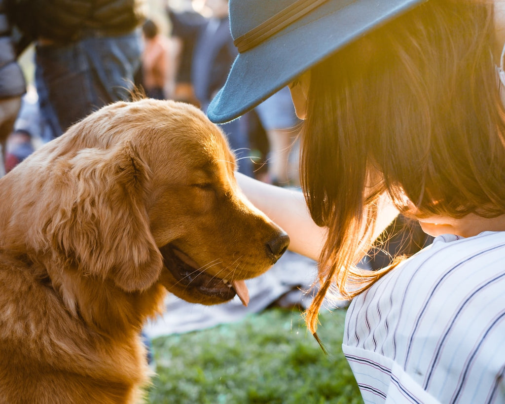5 Ways of How Dogs Communicate With Us
