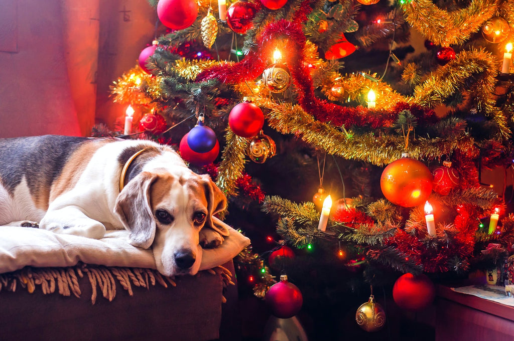 3 great ways to spend the holiday season with your pets