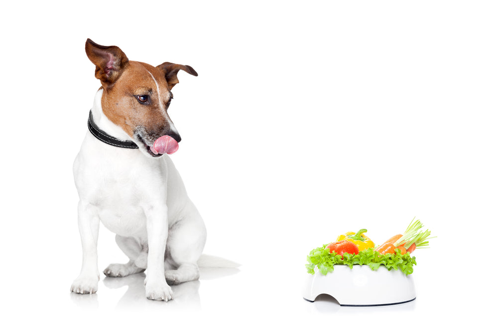Dogs not eating vegetables? Try these 5 tricks!