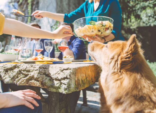 9 Brunch Hazards and Dangerous Foods for Dogs and Cats