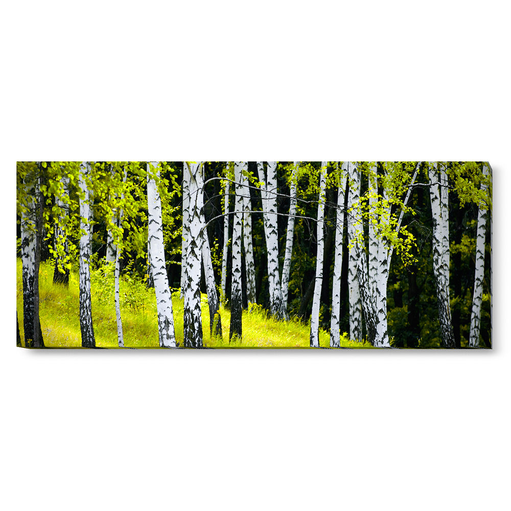 Tablou canvas 50x130 cm BIRCH FOREST