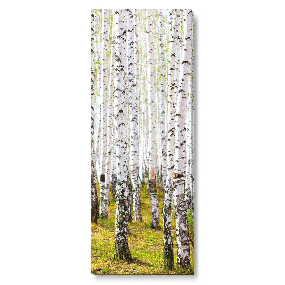 Tablou canvas 45x120 cm BIRCH TREES