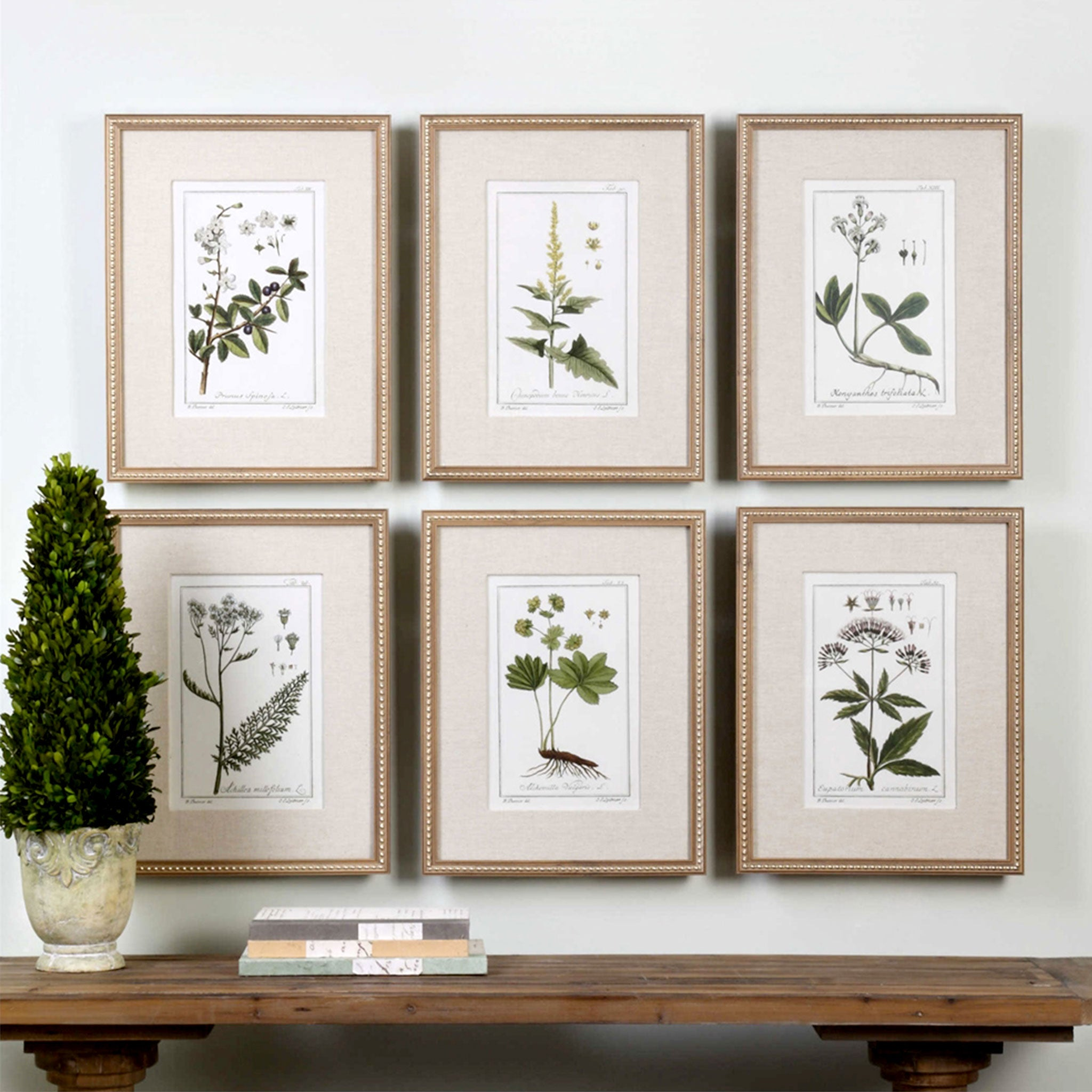 GREEN FLORAL BOTANICAL STUDY Set 6 tablouri