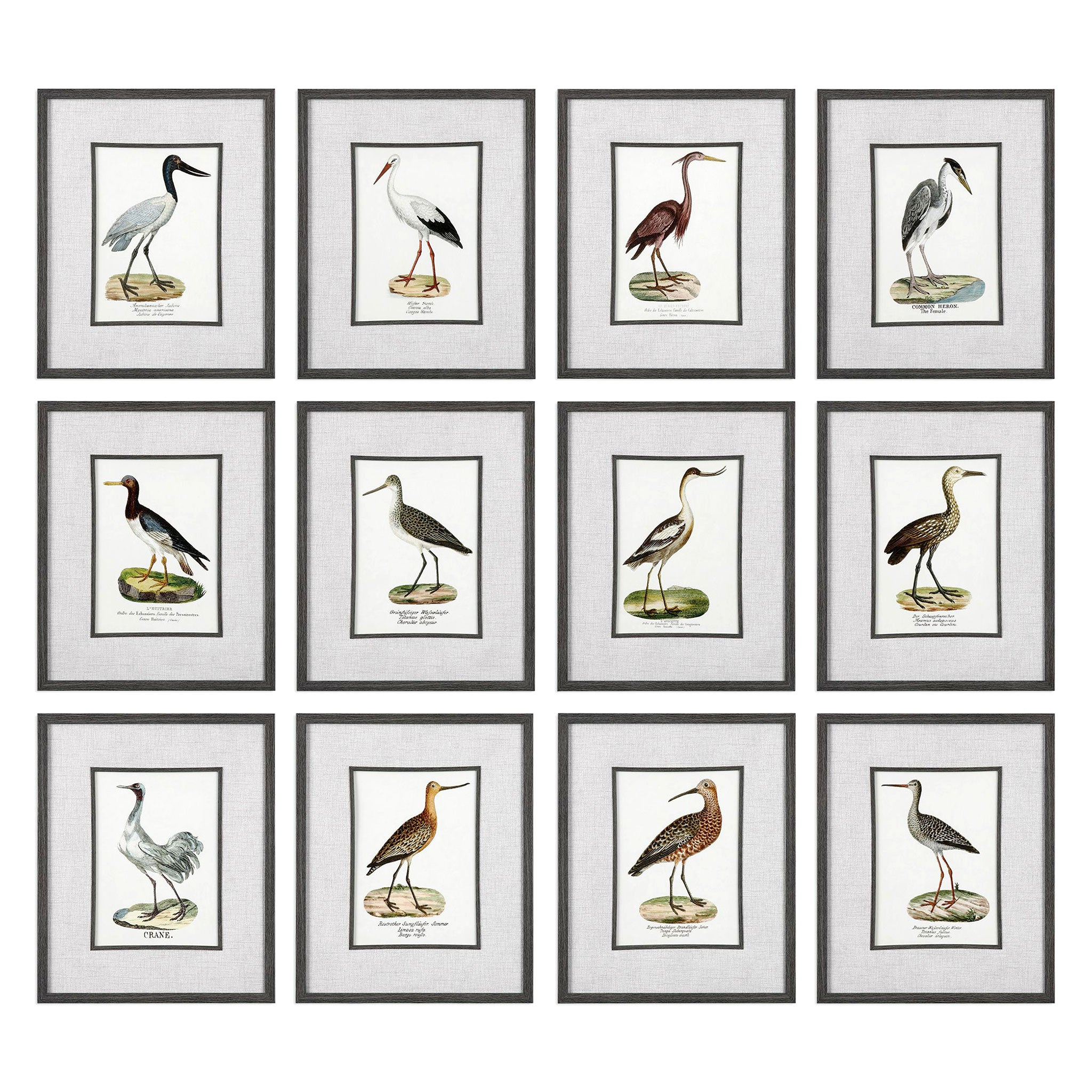 SEASHORE BIRDS Set 12 tablouri