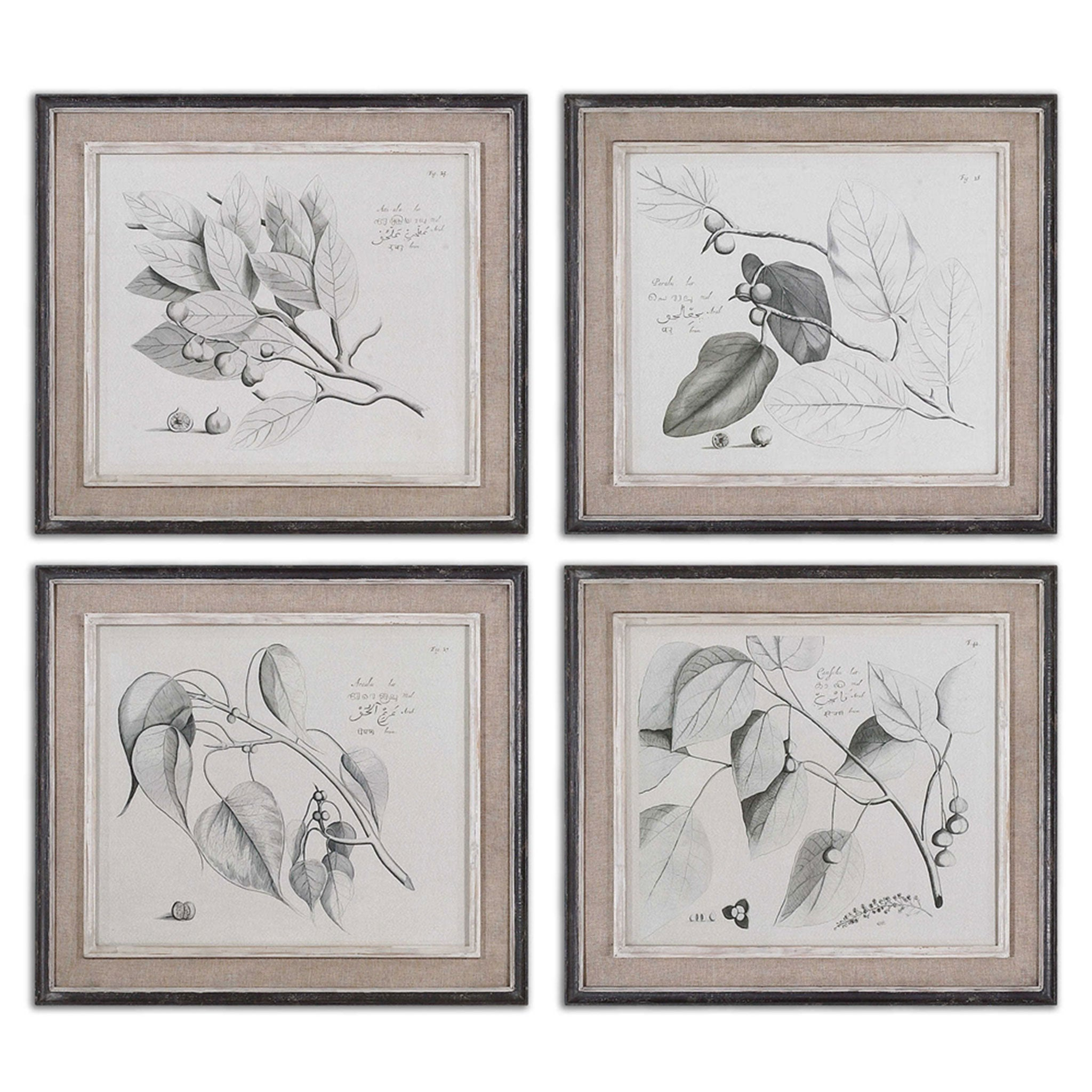 SEPIA LEAF STUDY Set 4 tablouri