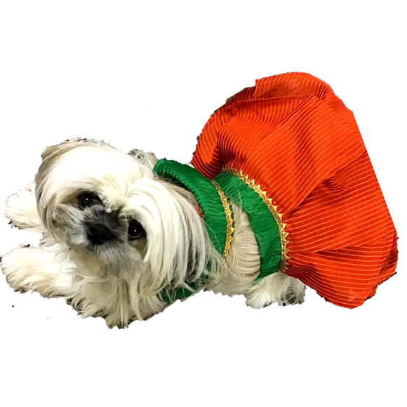 green and orange dog choli