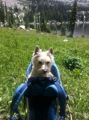 Dog carrier backpack for 30 lb dog