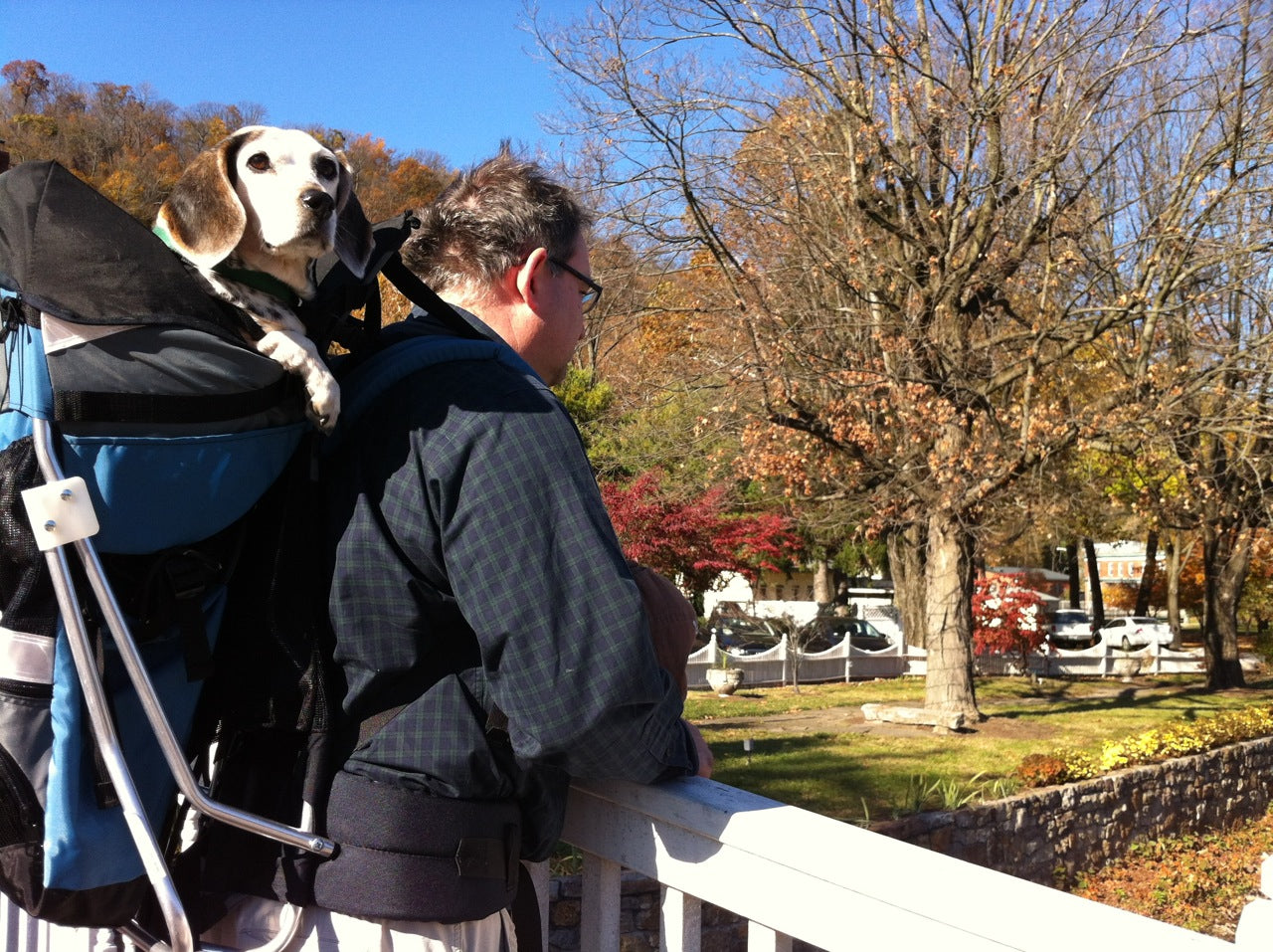 Dog carrier backpack for large dog