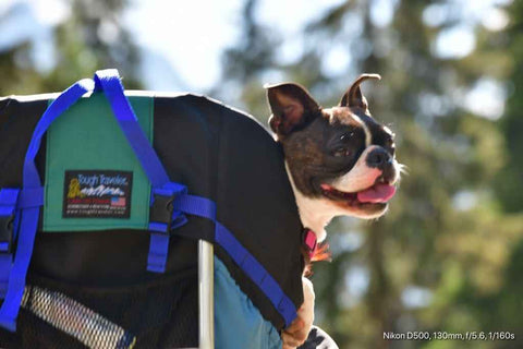 STALLION (XL) DOG PERCH BACKPACK