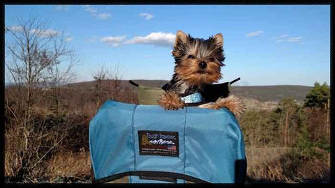 DOG PERCH BACKPACK