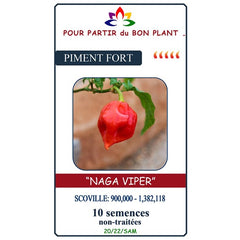 Semence Piment Fort