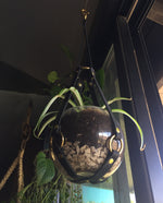 Baby plant hanger with bowl