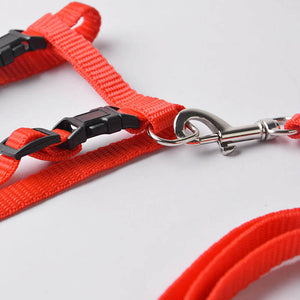 Nylon Cat Harness and Leash - Clasp-  JBCoolStuff