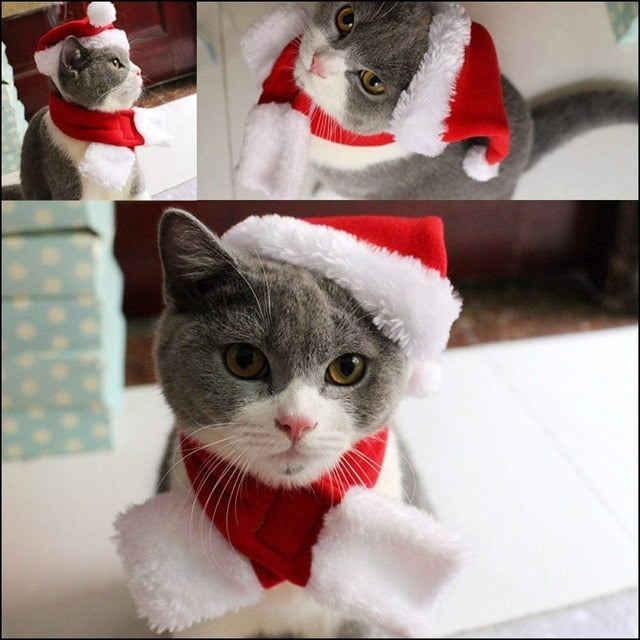 Santa Cat Hat with Muffler - Christmas - JBCoolCats