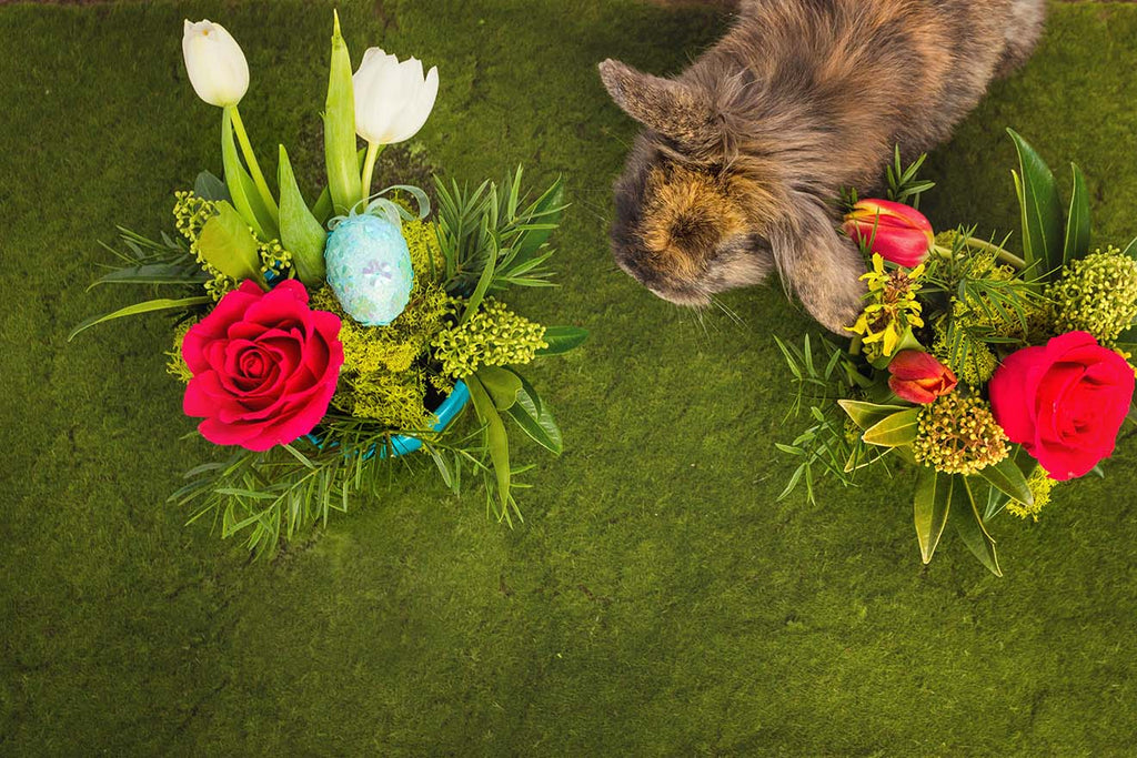 A real bunny hopping through easter floral arrangements from tickled floral in sherwood park