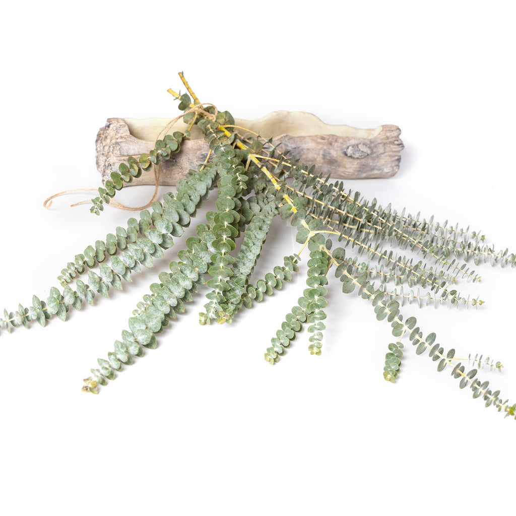 Fresh Eucalyptus Shower Steamer Bunches