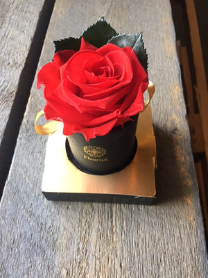 Preserved Rose - Multiple Colour Options