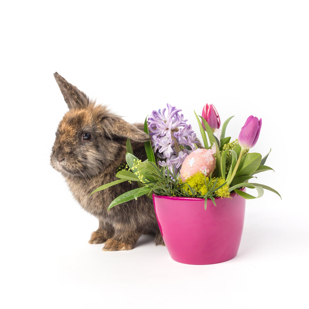 bunny with easter floral arrangement in a hot pink pot