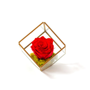 preserved red rose in a square glass terrarium, by Tickled Floral in Sherwood Park, delivery to Edmonton, Beaumont, St.Albert